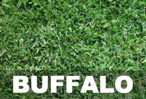 Buffalo Grass Lawn Care And Mowing Guide
